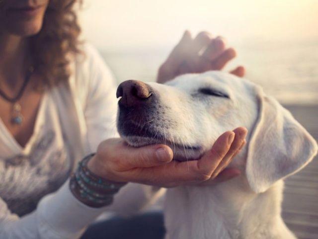 Збили чуже або своє собаку: прикмета, якщо собака померла або вижила — тлумачення сну, нейтралізація негативу