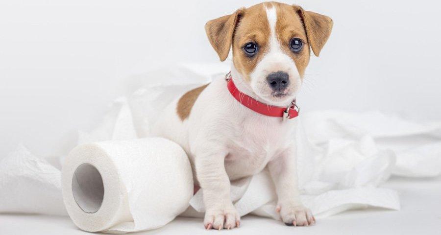 Препарат Антигадин: опис, форми випуску, склад, спосіб використання, побічні ефекти, протипоказання, аналоги — сучасний засіб та чудовий помічник у вихованні собак