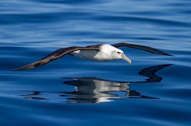 У якій птиці найбільший розмах крил: топ-10, опис, фото