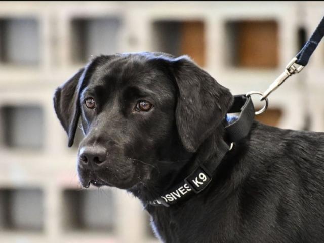 Правила вигулу собак в місті: закон РФ і штрафи за порушення