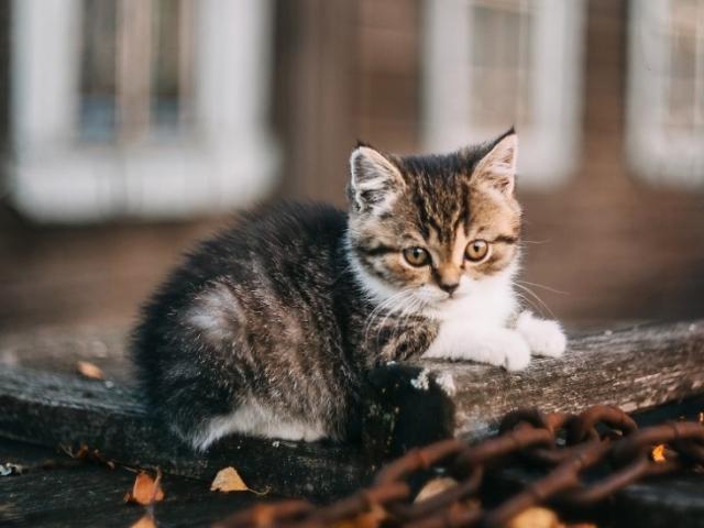 Глисти у кішок: причини, симптоми, лікування, профілактика