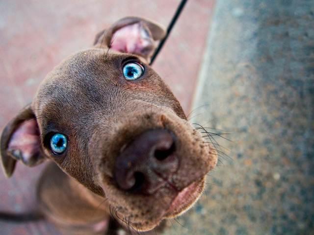 Собака гризе, кусає свій хвіст і задні лапи: причини, лікування