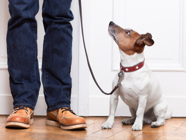 Чому ж скиглить собака: причини — що робити?