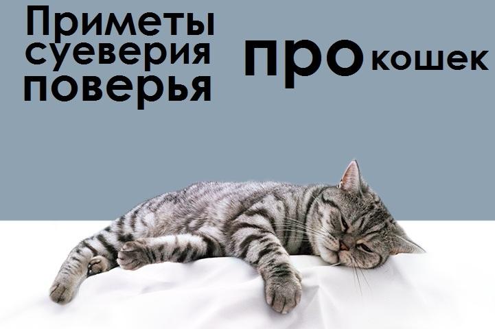 Як кішка домовляється з домовиком і будь кошенят краще дарувати на весілля? Народні повір'я про таємничих тварин — кішок