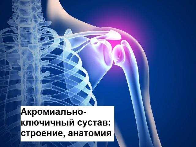 Акроміально-ключичный суглоб: форма, будова, анатомію, кровопостачання, рухи, м'язи, зв'язки, класифікація, функціональні особливості, характеристика. Захворювання акроміального суглоба: вивих, артроз, деформуючий остеоартроз, розрив — лікування