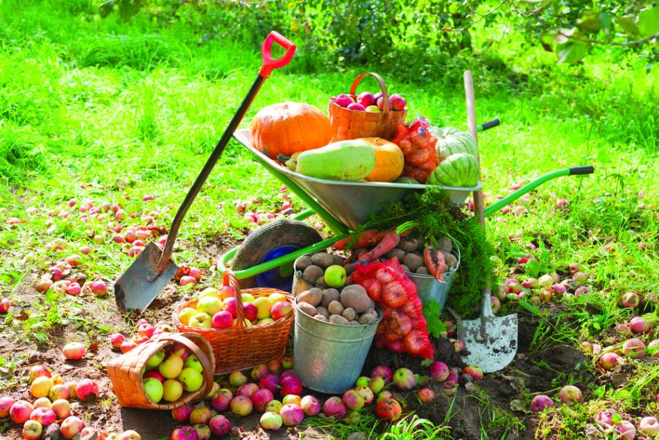 Місячний посівної календар садівника і городника Алтайського краю на 2019 рік — сприятливі дні для сівби насіння та висаджування розсади овочів, огірків, томатів, перцю, капусти, баклажанів, коренеплодів, дерев у теплицю і грунт: таблиця