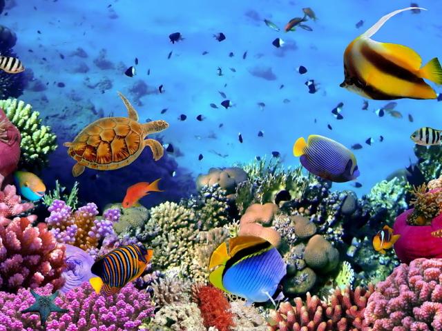 Червоне море: де знаходиться на карті світу, яка температура води по місяцях, які країни омиває та курорти для пляжного відпочинку? Чому Червоне море називається Червоним? Є акули в Червоному морі, і які є небезпечні мешканці і риби?