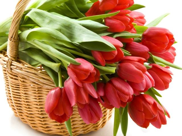 Тюльпани відцвіли: коли викопувати цибулини після цвітіння? Потрібно викопувати тюльпани кожен рік? Потрібно викопувати цибулини тюльпанів на зиму?