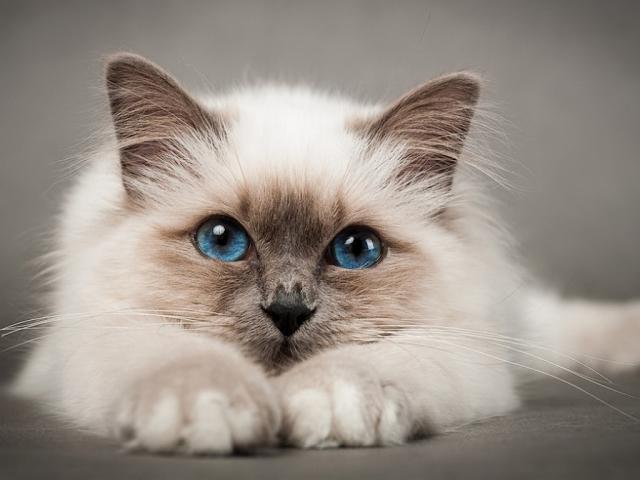 Кішки — прикмети, забобони, повір'я. Прикмети про чорних, білих, рудих, сірих, трибарвних кішок в будинку. До чого кішка прийшла в дім, пішла з дому, народжує, паскудить, вмивається, чхає, вмирає, катається по підлозі на спині, сидить на вікні, пере