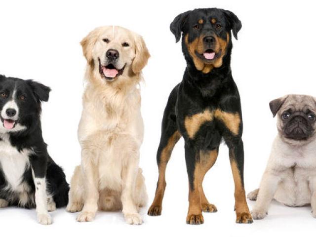 Як назвати собаку хлопчика? Імена для собак хлопчиків, рідкісні та красиві, для маленької породи, великий, мисливської, бійцівської, дворняжки, чорної, червоної, білої: список імен зі значенням