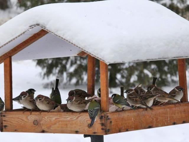 Як зробити годівницю для птахів своїми руками: ідеї, майстер-класи, фото. Як зробити годівницю для птахів з дерева, картонної коробки, жерстяної банки, бляшаної коробки з-під печива, зі старої посуду? Як зробити цілком їстівну зернову годівницю для пт