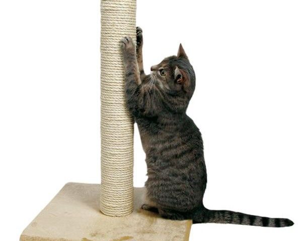 Як зробити когтеточку для кішки самостійно своїми руками: ідеї, фото, загальні рекомендації, майстер-класи з виготовлення когтеточки настінної, когтеточки-стовпчика, когтеточки-будиночка, з гофрованого картону