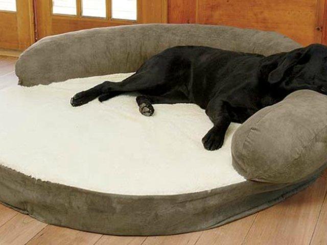 Як зшити лежак для собаки своїми руками? Способи виготовити лежак своїми руками: фото, схеми, побудова викрійки, інструкція