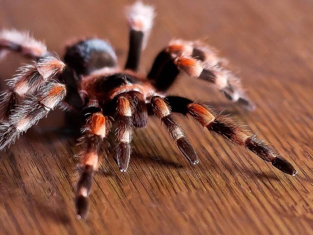 До чого сниться павук: чорний, коричневий, білий, великий, маленький. Тлумачення сну про павуків в павутині, повзуть по тілу, по стіні вгору — що означає, якщо вкусив павук?
