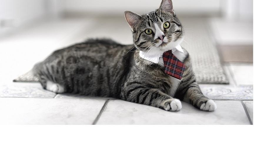 Як і чим правильно чистити вуха кішці: поради ветеринара, відео