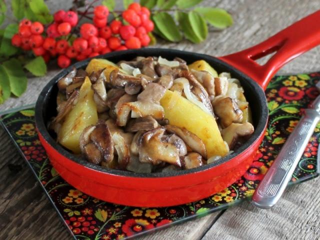 Смажені гриби маслюки: найкращі рецепти з цибулею, картоплею, сметаною, сиром, без варіння, на зиму. На якому маслі смажити маслюки? Як і скільки варити гриби маслюки перед смаженням по часу?