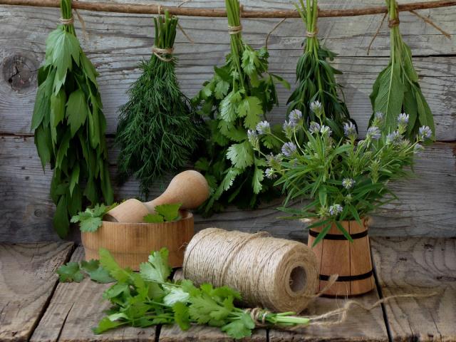 Приправи для перших і других страв із зелені на зиму: найкращі рецепти і секрети приготування