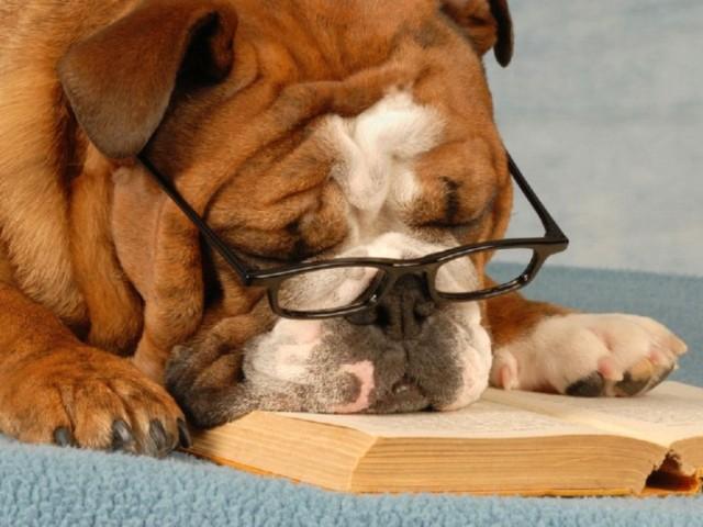 Як визначити, порахувати вік собаки за людськими мірками: розрахунок, таблиця віку собаки і людини. Скільки років живуть собаки за людськими мірками? Як визначити біологічний вік собаки? Собаки довгожителі: рекорди, породи
