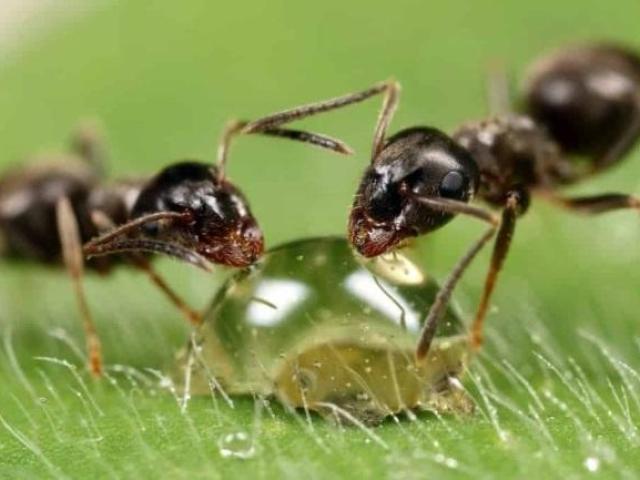 Як буде мураха по-англійськи: переклад слова мураха на англійську мову з транскрипцією. Опис мурашки на англійській мові з перекладом: текст. Як правильно пишеться слово мураха англійською мовою: правопис з транскрипцією