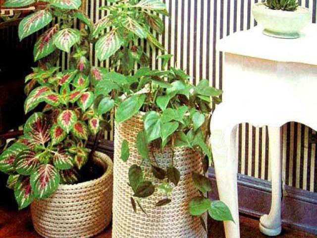 Як зробити красиві кашпо для кімнатних квітів своїми руками підлогові, настінні, підвісні, настільні? Макраме кашпо для квітів: майстер клас для початківців, схеми плетіння, фото. Як купити підлогове і настінне кашпо для квітів на Алиэкспресс?