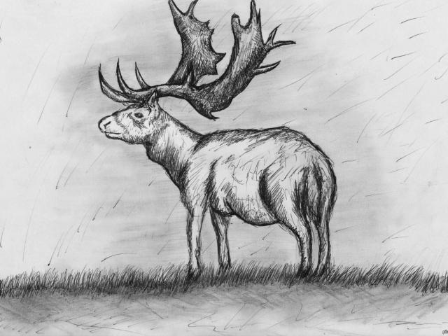 Як намалювати оленя олівцем поетапно для дітей і початківців? Олень: малюнок для дітей