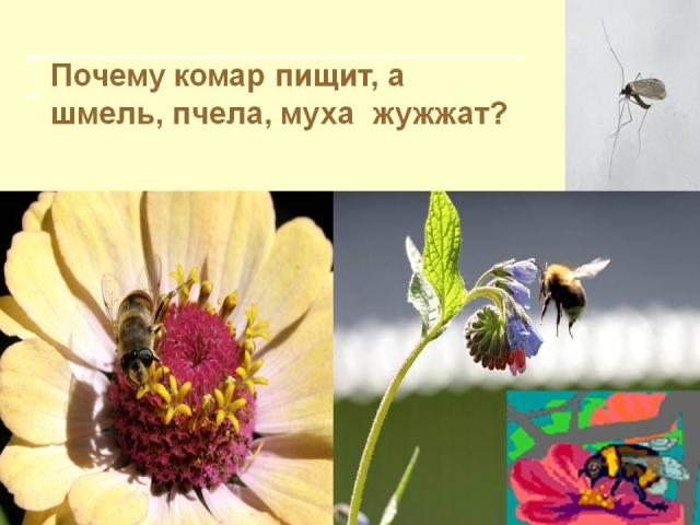 Хто частіше змахує крильцями при польоті: муха чи комар?