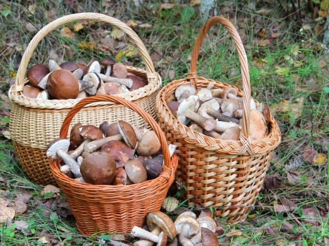 Як вирішити задачу: скільки рижиков кошику, якщо у кошику лежить всього 40 грибів – рижиків і груздів?
