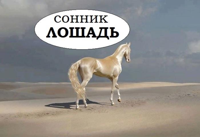 Сонник — коні: до чого сниться уві сні руда, чорна, біла, коричнева, сіра, плямиста кінь? До чого сниться образ, силует, тінь коня з гривою, рогами, крилами: тлумачення сну для чоловіків і жінок