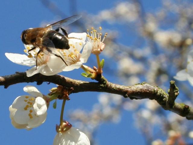 Народні прикмети про погоду на квітень, природі, пов'язані з церковними святами, на кожен день: опис, звичаї, обряди, що можна, а що не можна робити. Весілля, одружитися, вінчатися, народитися в квітні: прикмети