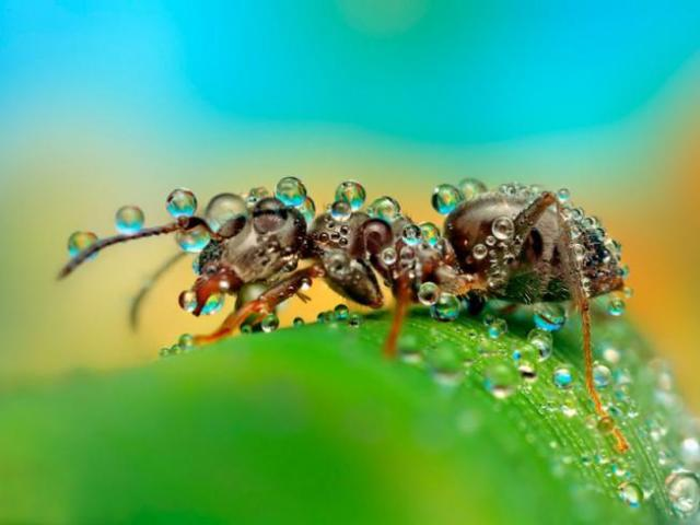 Прикмети про мурах будинку, лісі. Мурахи ховаються в гнізда, мурашник, нашестя мурашок, з'явилися мурашки в будинку, квартирі, на могилі, біля порога, мурашки принести додому, подарувати рослина з мурахою, повзе мураха за тобою, у ліжку: народні прийме