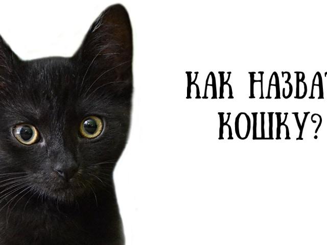 Імена для кішок і кошенят дівчаток: рідкісні та красиві. Як назвати кішку дівчинку чорну, руду, білу, сіру, триколірну?