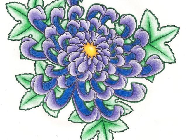 Як поетапно намалювати квіти? Хризантеми: малюнок олівцем