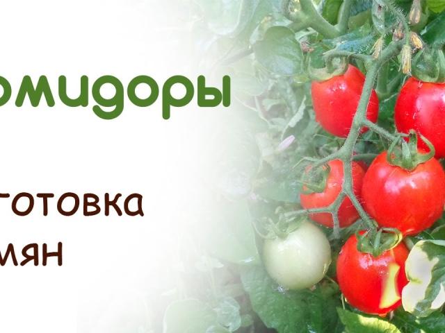 Як збирати і заготовляти власні, гібридні насіння помідорів? Як правильно зберігати насіння? Підготовка насіння до посадки помідорів на розсаду. Як правильно посадити помідори на розсаду у відкритий ґрунт?