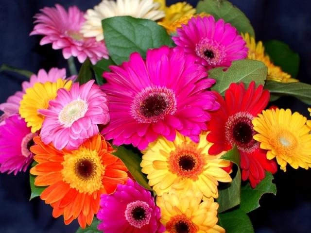 Квіти гербери: букет з трояндами, хризантемами. Як зробити гарний весільний букет з білих гербер, гербер і хризантем?