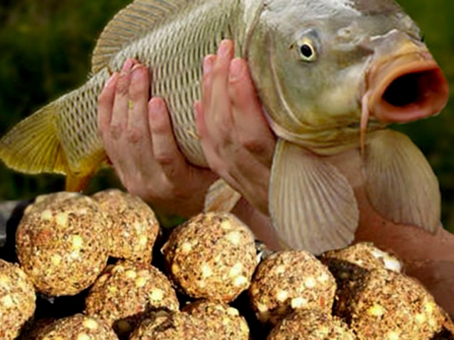 Як приготувати пшоно для риболовлі на коропа, карася для підгодовування? Як правильно зварити розсипчасте пшоно для риболовлі? Як правильно зварити кашу для підгодовування риби на риболовлю з пшона з перловкою, горохом, геркулесом, манною крупою і сухим м