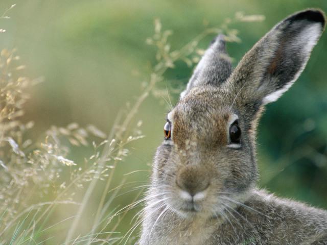 Сонник — сниться заєць: значення снів за різними сонникам