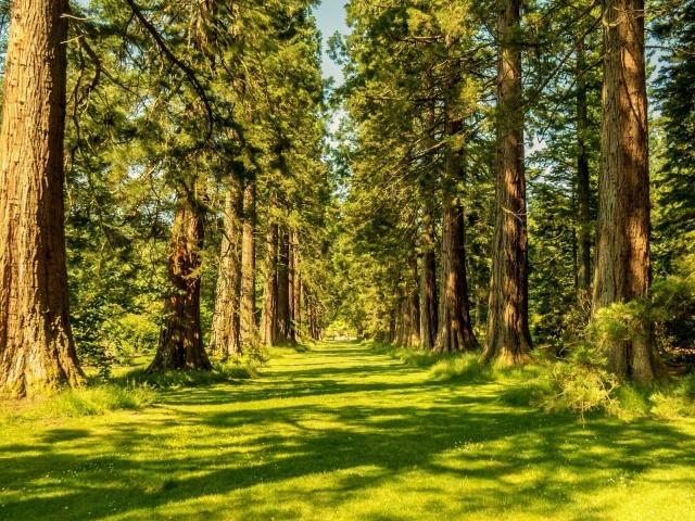 Сонник — сниться уві сні ліс: значення сну. До чого сниться гуляти, ходити, бігти, йти по лісі, заблукати в лісі жінці, дівчині, вагітної, чоловікові: тлумачення сну