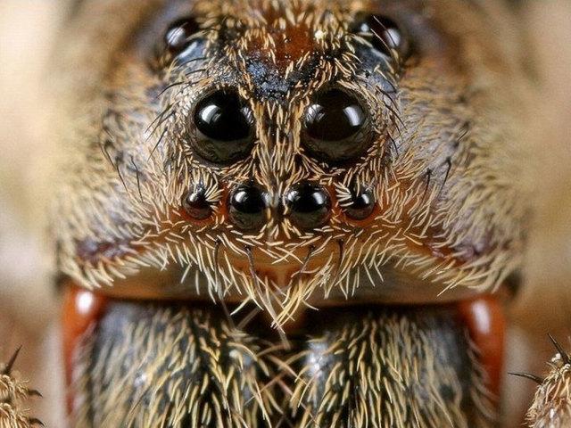 Фобія — боязнь, страх павуків, тарганів, мурах, бджіл, ос, черв'яків і інших комах: назва, причини, лікування