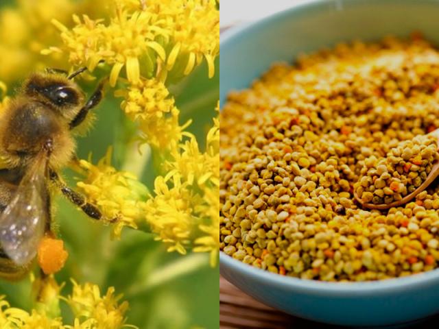 Що лікує квітковий бджолиний пилок? Рецепти застосування в народній медицині і косметології, корисні властивості та протипоказання, хімічний склад вітаміни бджолиної квіткового пилку