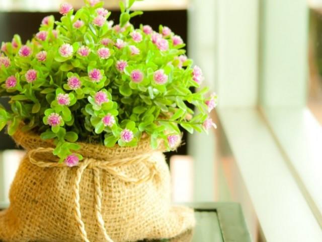 Як купити насіння квітів та овочів в інтернет магазині Алиэкспресс російською мовою? Алиэкспресс — цибулини і насіння квітів і овочів з Китаю: каталог, ціна, фото, відгуки