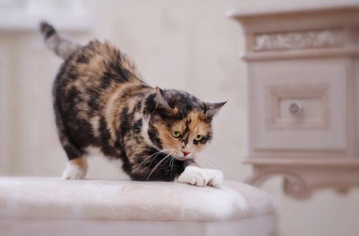 Кіт дере меблі: що робити? Як відучити кота дерти меблі: практичні поради і кардинальні методи? Як вибрати когтеточку для кота? Як привчити кота до когтеточке?