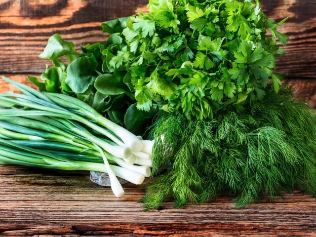 Як правильно зберігати свіжу зелень в холодильнику? Як і скільки зберігати зелену цибулю, петрушку, свіжу м'яту, шпинат, базилік, кріп в холодильнику?