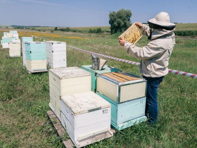 Птахи, які їдять бджіл: назва, опис, фото. Як захистити пасіку від птахів, комах, бджіл?
