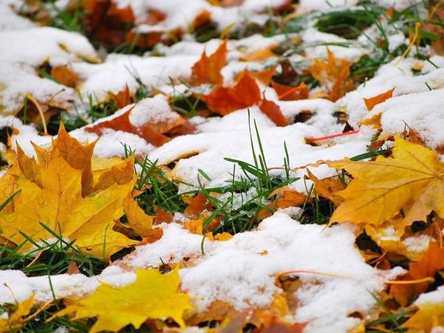 Народні прикмети осені ранньої, пізньої, теплою, холодною, погоди восени, осінні прикмети на зиму для дітей, дошкільнят, школярів: слова