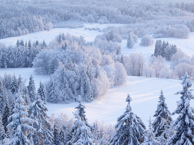 Прислів'я та приказки про зиму, зимові місяці для дітей дошкільного та шкільного віку, школи, ДНЗ: збірник кращих прислів'їв з поясненням сенсу. Які є і як знайти прислів'я та приказки про зиму, зимові місяці для дітей?
