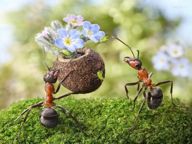 Чим вивести рудих і чорних дрібних мурах в квартирі, будинку? Як купити препарати, отрути, пасток, ультразвукові відлякувачі для знищення домашніх мурашок в інтернет магазині Алиэкспресс? Чим труїти мурах у квартирі: народні рецепти