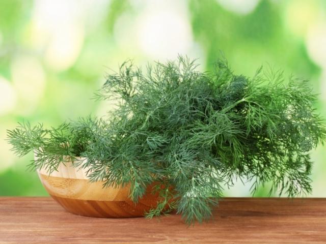 Вирощування свіжої зелені на підвіконні взимку в квартирі для початківців круглий рік: поради, технології. Що зелені можна виростити взимку вдома на підвіконні: сорти зелені. Як посадити зелень на підвіконні будинку насінням, в горщику, без ґрунту: описан