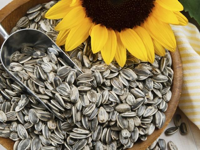 Чи можна вагітним жінкам є сирі та смажені соняшникове, гарбузове, кунжутне насіння, козинаки? Корисні насіння гарбуза, соняшнику, кунжуту вагітним?