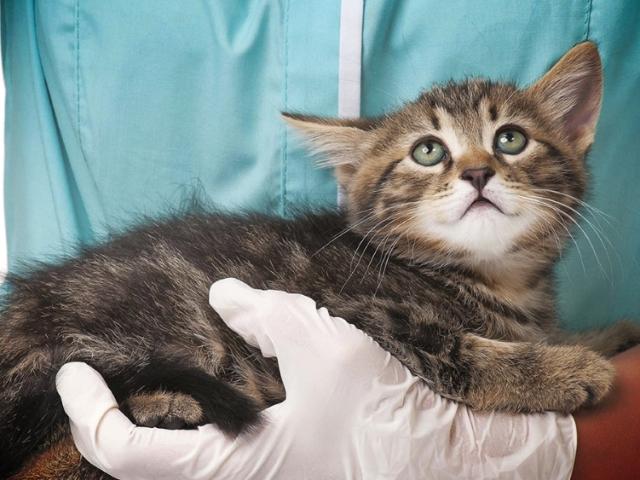 Вакцина Поливак для кішок і собак: інструкція із застосування, відгуки