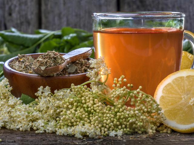 Як застосовувати чай з квітів бузини при застуді?